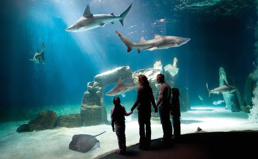 l acquario di genova