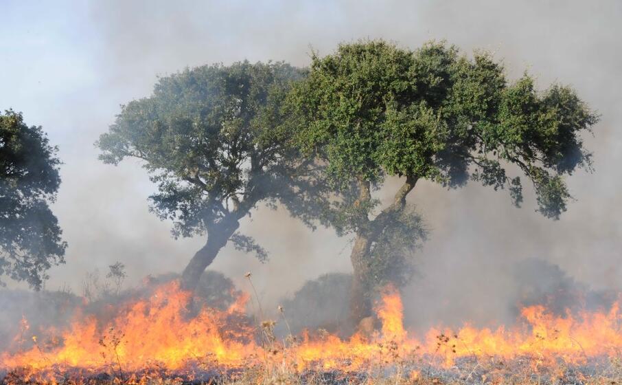 incendi anche nell oristanese