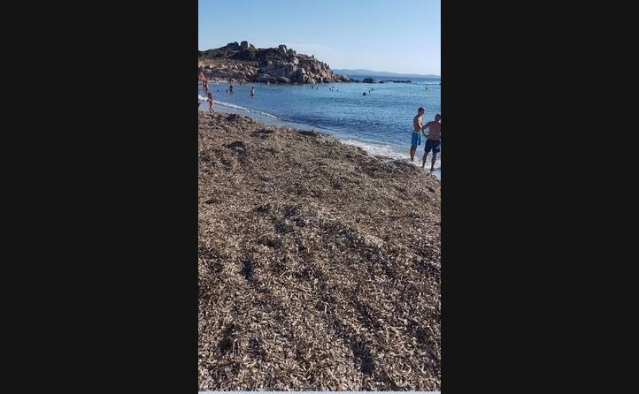 questa la situazione alla spiaggia di baia santa reparata il comune latitante antonia antonietti