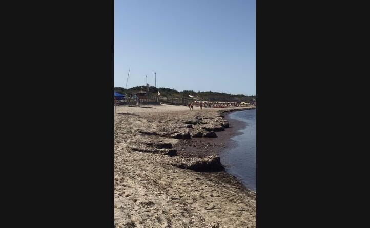 si ringrazia il sindaco per non aver spostato la poseidonia le altre spiagge sono pulite la situazione a spiaggia grande calasetta daniela