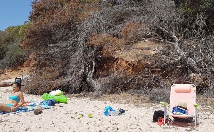 spiaggia di santa margherita abbandonata con alberi secchi e pericolosi il comune di pula prende 6 euro al giorno a macchina per i parcheggi nella pineta per non fare nulla nel villaggio debora anzalone