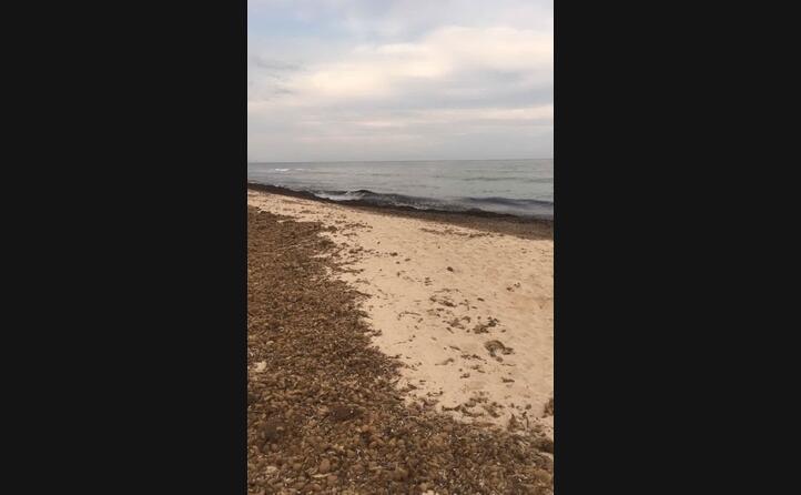 la spiaggia della comunione questa schifezza che dire una vergogna xch sembra che le alghe vengano messe in cumuli e cosa ne sar tra puzza mosche api e via di seguito lauretta zucchini santa margherita