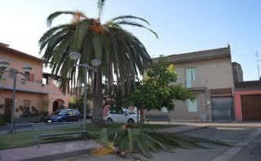la palma precipitata (foto di marco deidda)