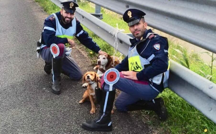 i cagnolini e la polstrada