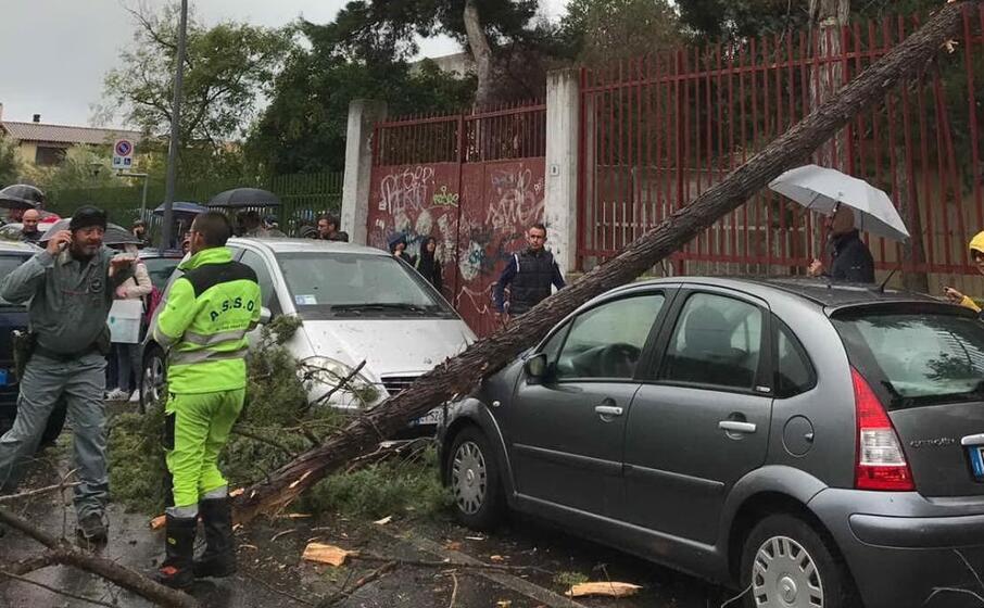 l albero caduto a via santulussurgiu (foto elia sanna)