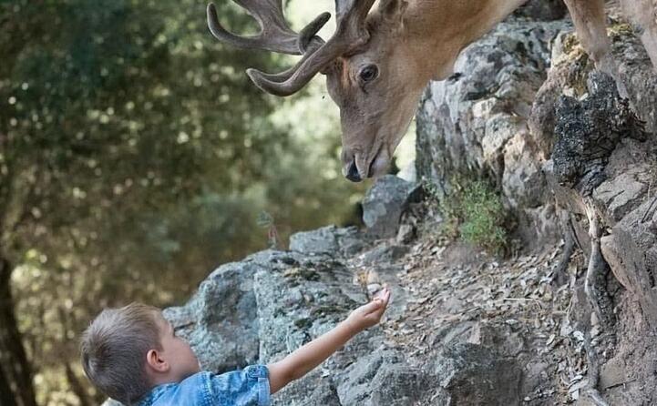 obiettivo sardegna le migliori foto dei nostri lettori (il bimbo e il cervo a fonni agriturisoparcodonnortei)