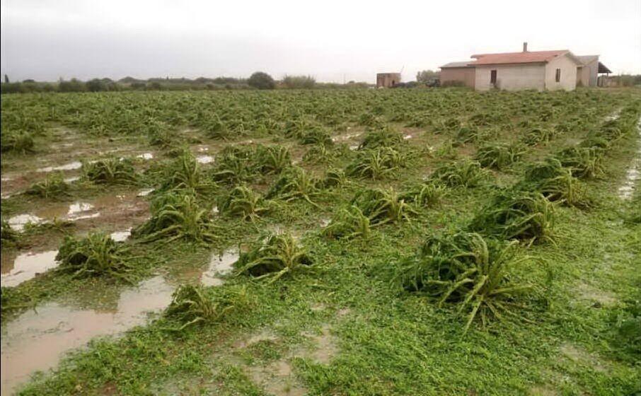 un campo di carciofi distrutto dal maltempo (foto coldiretti)