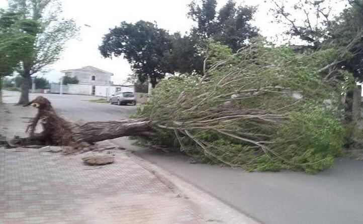 un albero caduto a domusnovas (l unione sarda farris)