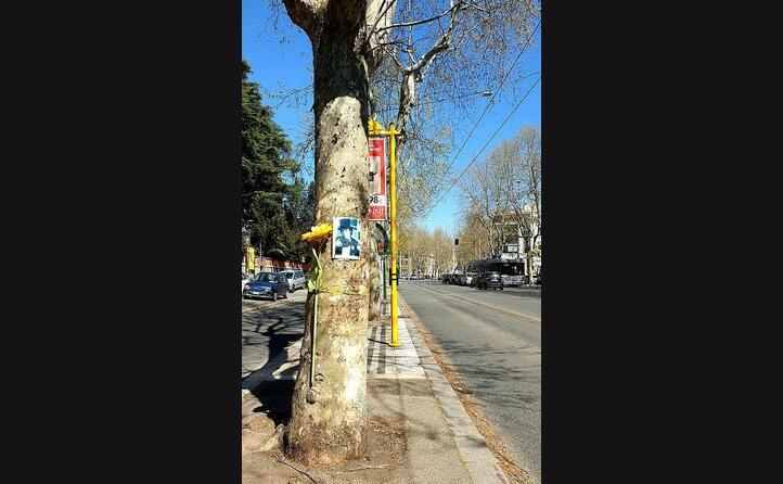 una foto dell artista su un albero in via nomentana a roma (foto wikipedia
