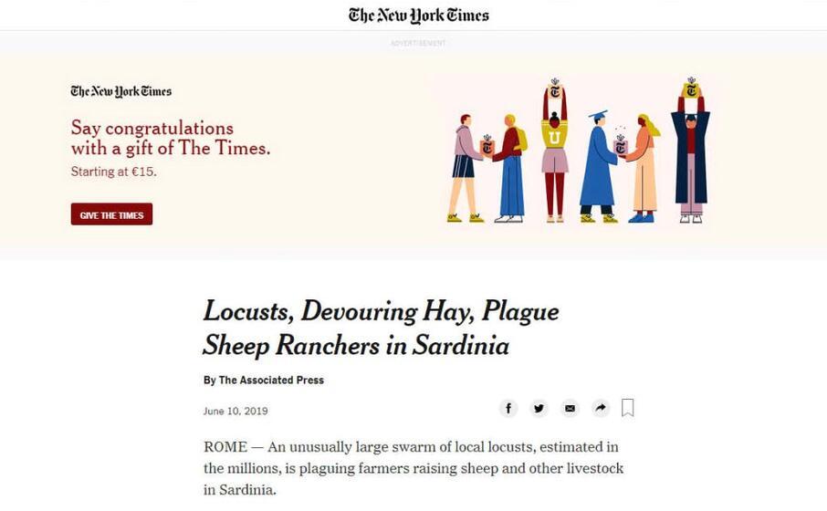 il new york times la piaga delle locuste che divorano i campi degli allevatori di pecore in sardegna