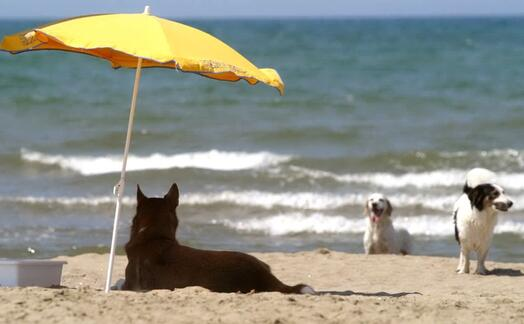 cani in spiaggia (ansa)