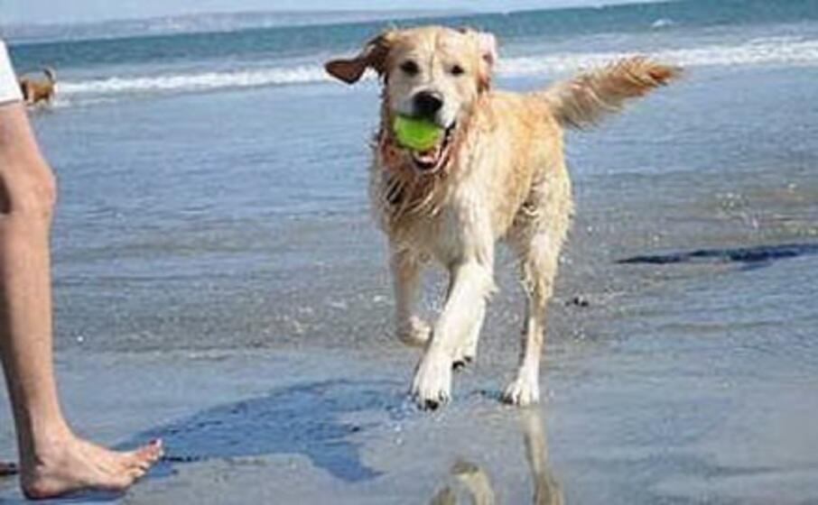 un cane al mare (foto l unione sarda pinna)