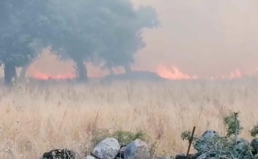 il fronte dell incendio (foto l unione sarda sanna)