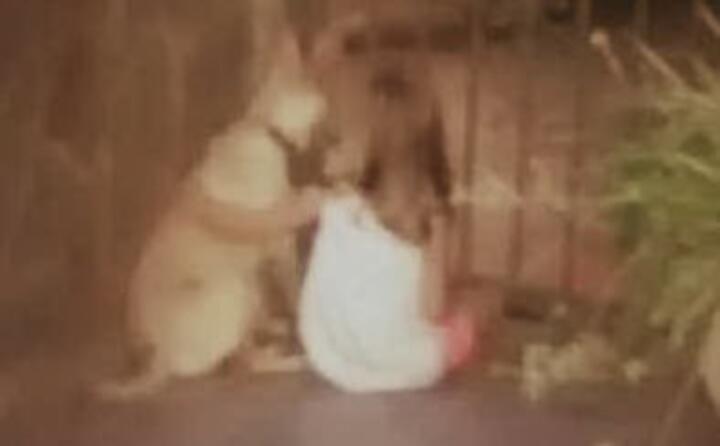 giulia schilir di 3 anni flumini di quartu con il suo amico pippo