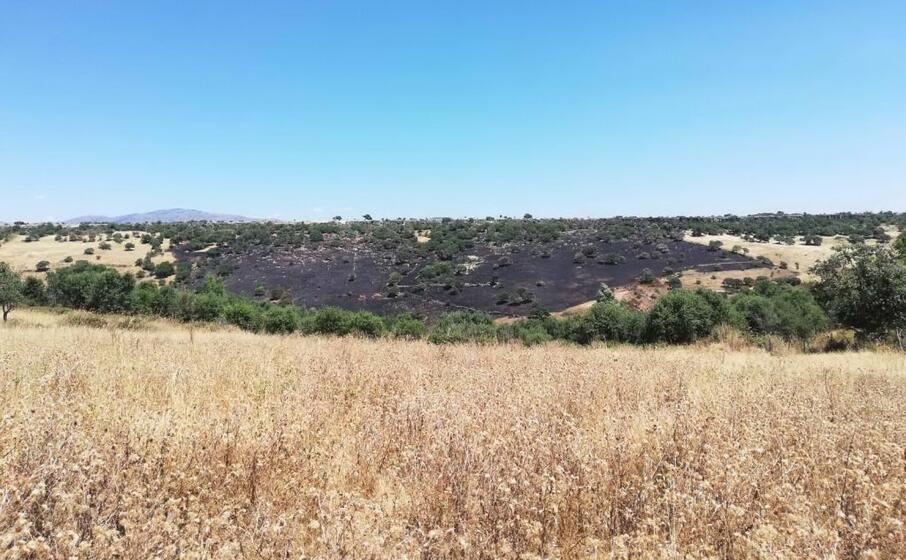 la zona colpita dall incendio a nurri (l unione sarda pintori)
