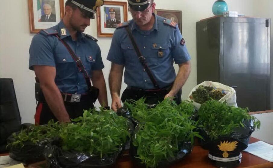 alcune delle piante sequestrate (foto carabinieri)