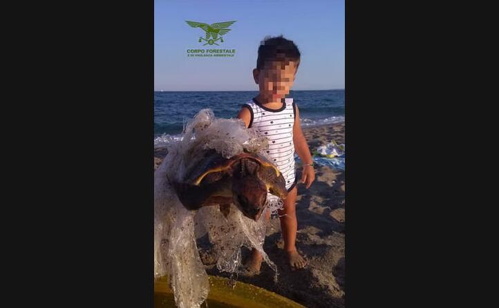 il bimbo di 5 anni ha avvistato l esemplare dalla spiaggia