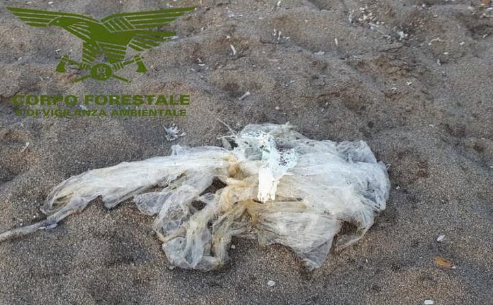 l animale era intrappolato nella plastica