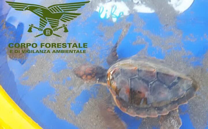 la tartaruga era in balia delle onde