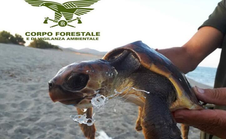 la tartaruga salvata a villaputzu