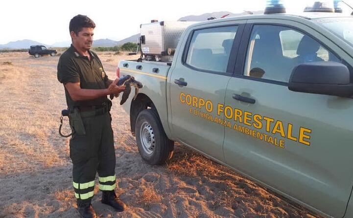 la tartaruga stata salvata in tempo (foto corpo forestale)