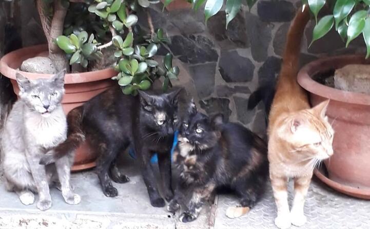 i miei 4 gattini michell nerina batuffolina e garfield