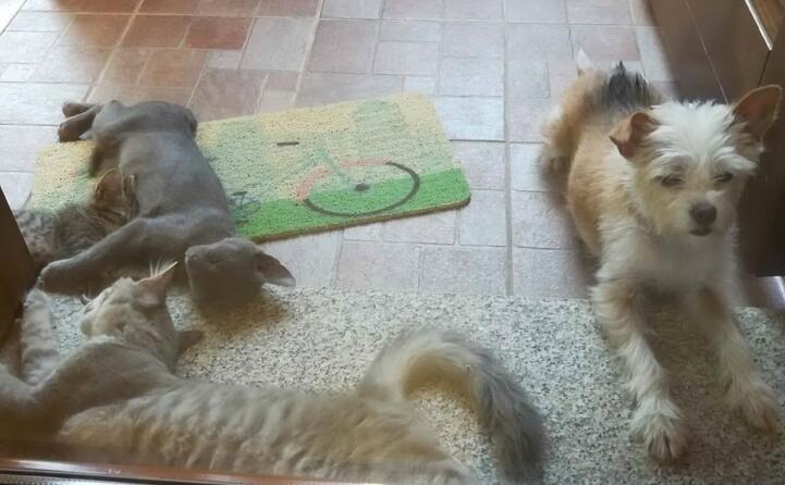 tigro thanos leo e stella (da danila di cagliari)