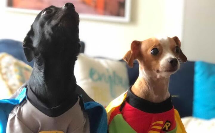 vivo a san diego scrive alessandro mereu sono i giorni del comic con la pi grande convention sui fumetti e arte degli usa i miei cani gorda a sinistra e cipolla si sono trasformati in super eroi