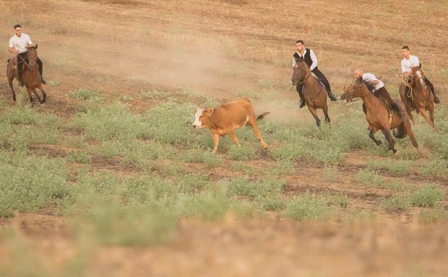 la caccia alla giovenca (foto pro loco)