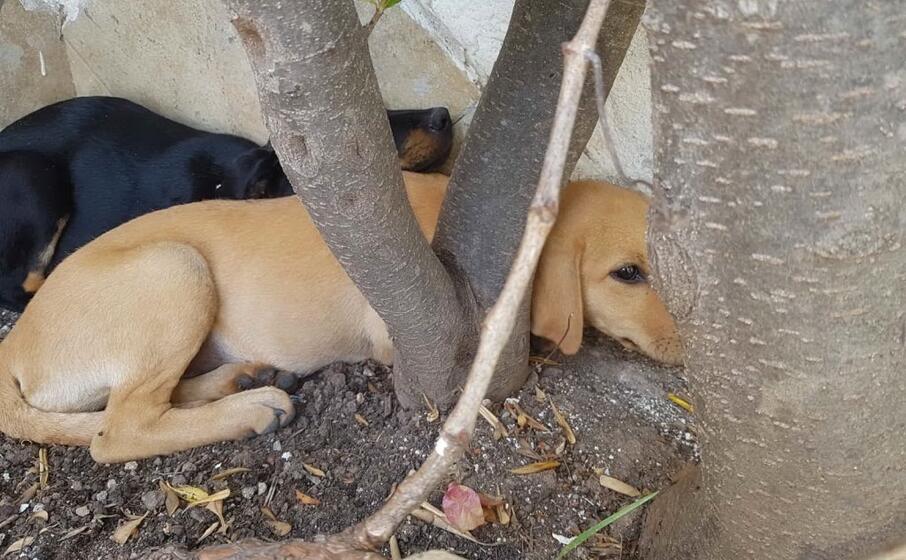 le cagnoline (foto l unione sarda murgana)