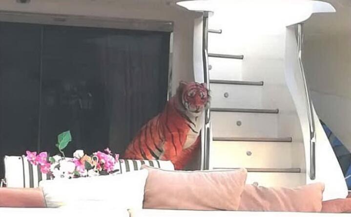 alcuni passano alle tigri in yatch (foto instagram twitter e facebook)