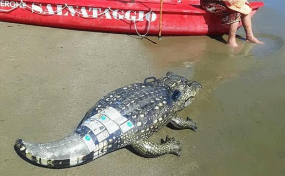 c chi ironizza ipotizzando il caimano jack in spiaggia