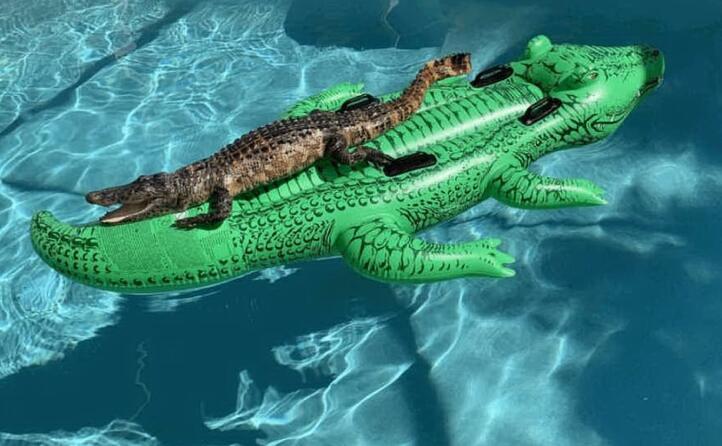 orosei meme e sfott per il caimano jack