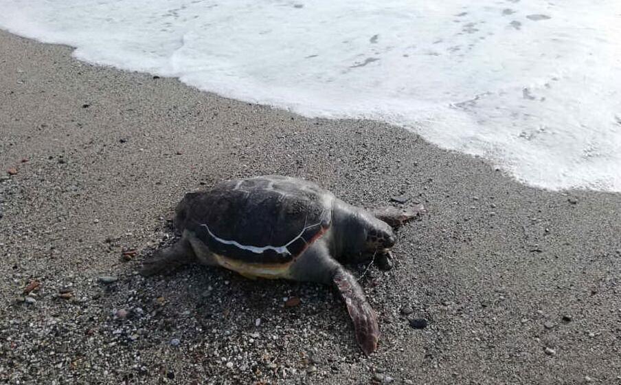 la tartaruga (foto mura ruggiu)