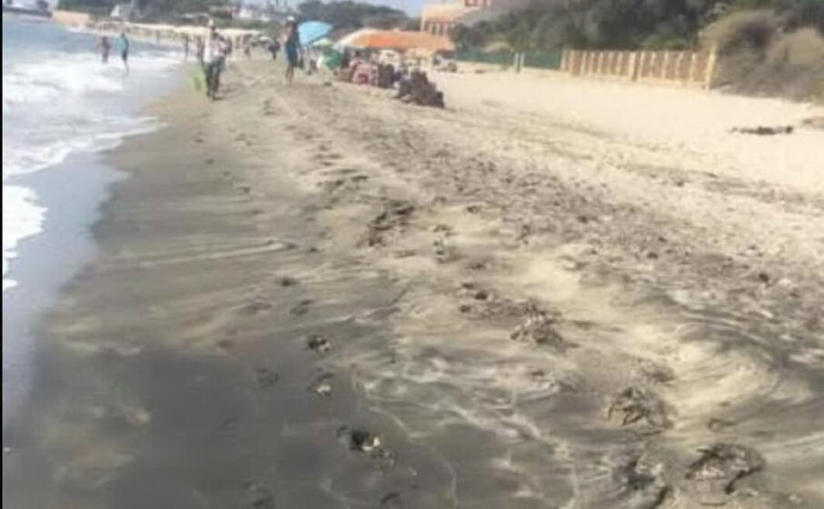 come appariva la spiaggia di guventeddu questa mattina (foto l unione sarda murgana)