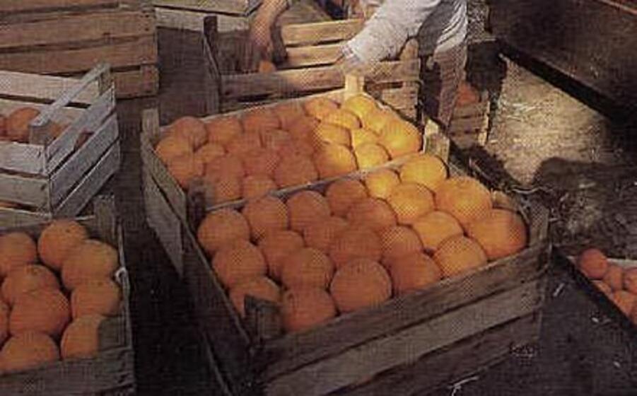 arance (archivio l unione sarda)