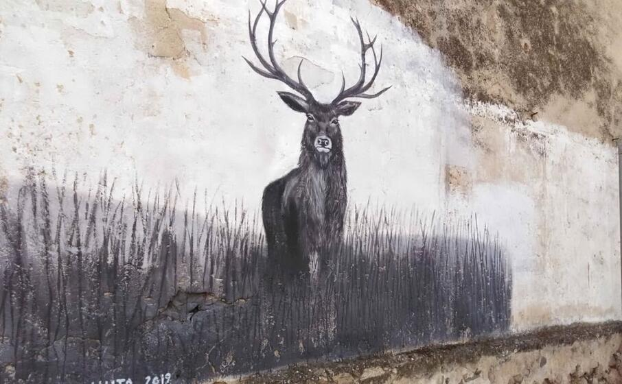 il cervo (foto l unione sarda cazzaniga)