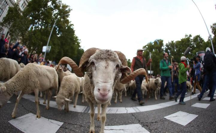 circa 2mila i capi portati dai pastori