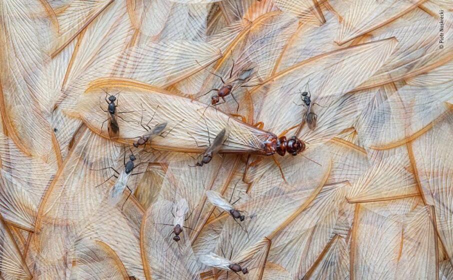 ali di termiti e formiche in mozambico di piotr narkrecki