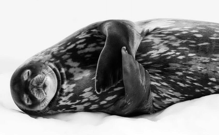 i sogni di una foca di ralf schneider