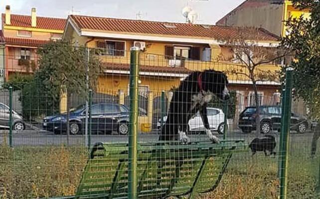 il meticcio abbandonato nell area cani di via sicilia