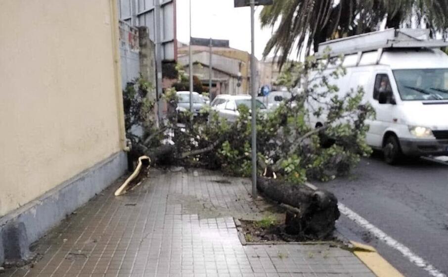 l albero precipitato (foto elia sanna)