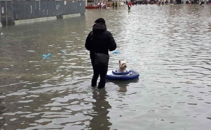 un cagnolino su un canotto improvvisato