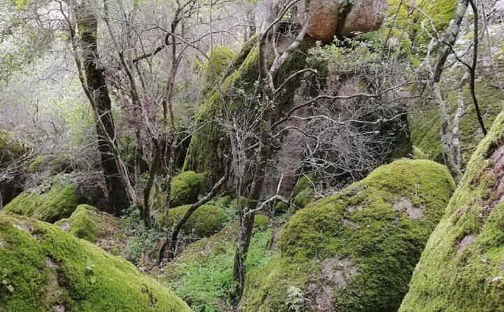 il luogo del ritrovamento del corpo (foto google maps)