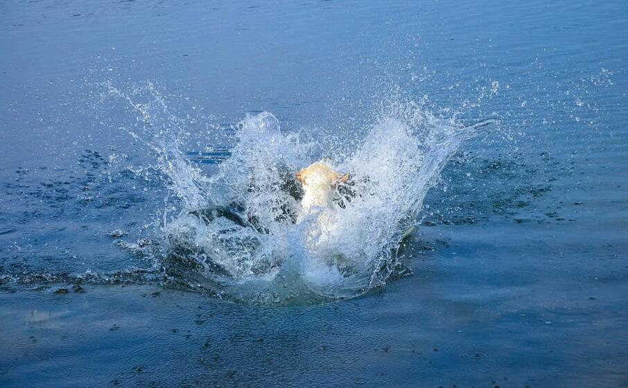 Cane insegue un gabbiano e finisce in mare col padrone: salvati