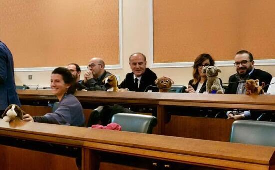 """Peluche in aula ad Alghero, la minoranza ironizza e non sta """"a cuccia"""" - L'Unione Sarda.it"""
