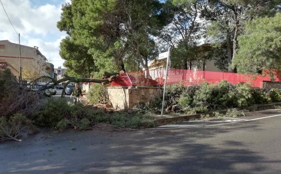 l albero caduto tra via cagliari e via firenze (l unione sarda foto cazzaniga)