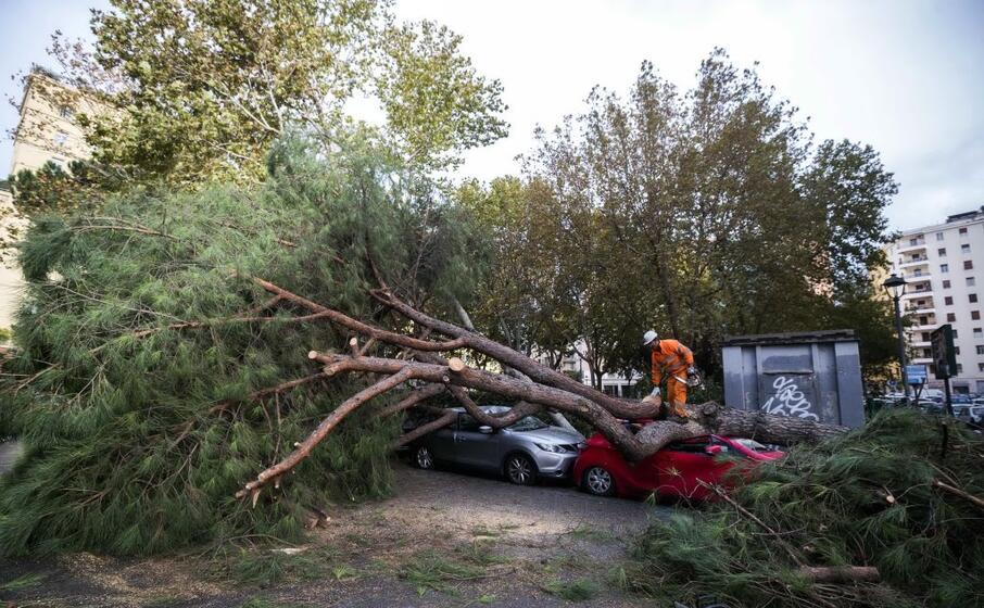 un albero caduto a roma (ansa)