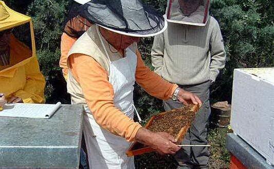 apicoltori sardi (foto pier giacomo pala unione sarda)