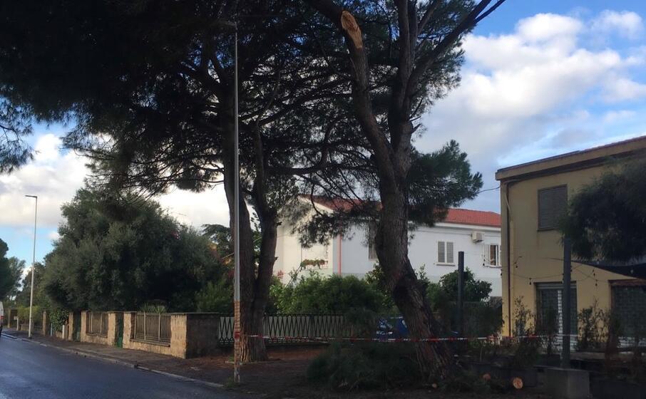 il ramo di pino caduto in via costituente (l unione sarda foto scano)